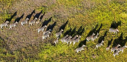 俯拍非洲野生动物