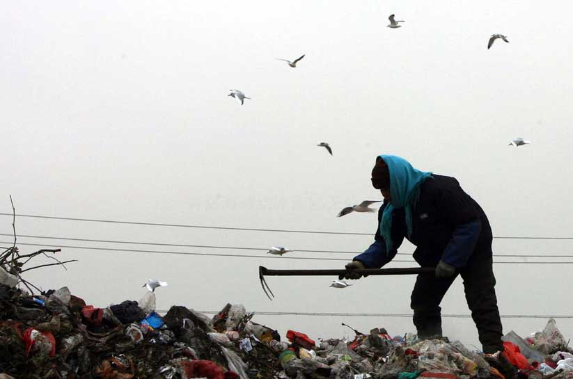 成群的海鸥在青岛市太原路垃圾场上空
